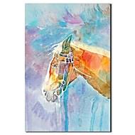 Χαμηλού Κόστους Artist - M.Xander-Hang-ζωγραφισμένα ελαιογραφία Ζωγραφισμένα στο χέρι - Ζώα Κλασσικό Περιλαμβάνει εσωτερικό πλαίσιο / Επενδυμένο καμβά