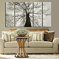 Stretched Canvas Art Botanical Old Tree Set of 5