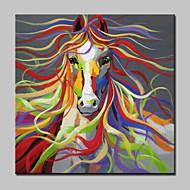 billiga Djurporträttmålningar-Hang målad oljemålning HANDMÅLAD - Djur Moderna Duk