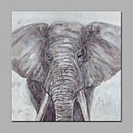 billiga Djurporträttmålningar-Hang målad oljemålning HANDMÅLAD - Djur Moderna Utan innerram / Valsad duk