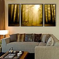 Χαμηλού Κόστους Εκτυπώσεις σε Κορνίζα-Τοπίο Ζώα Εικόνα Wall Art, Πλαστικό Υλικό με Πλαίσιο For Αρχική Διακόσμηση Πλαίσιο Τέχνης Σαλόνι