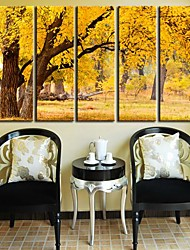 cheap -Stretched Canvas Art Landscape Autumnal Forest Set of 5