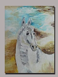Hand Painted Horse Oil Painting with Stretched Frame Ready to Hang