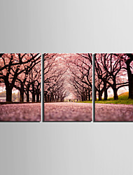 cheap -Stretched Canvas Print Art Landscape Path of Sakura Set of 3