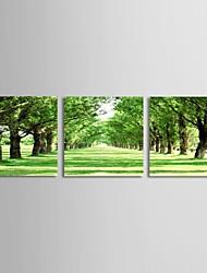 Canvas Art Paisagem verde árvores Set Road of 3