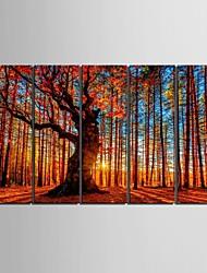 allungato tela legno rosso pittura decorativa set di 5