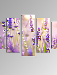 VISUAL STAR®5 Panel Lavender Picture Print on Canvas Flower Wall Art for Living Room Decor Ready to Hang