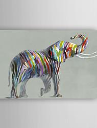 ručně malované olejomalba zvířat krásný slon s nataženém rámem 7 stěny arts®