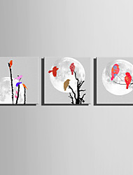 cheap -E-HOME Stretched Canvas Art Colorful Birds On A Branch Decoration Painting  Set of 3