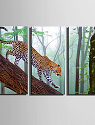 E-HOME Stretched Canvas Art The Leopard On The Tree Decoration Painting Set Of 3