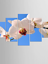 Giclee Print Floral/Botanical Modern PastoralFive Panels Canvas Any Shape Print Wall Decor For Home Decoration