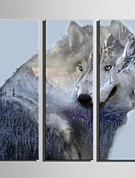 E-HOME Stretched Canvas Art Forest And Wolf Horse Decoration Painting Set Of 3