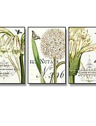 economico -Botanica Cartoni animati Illustrazioni Decorazioni da parete,Plastica Materiale con cornice For Decorazioni per la casa Cornice Salotto