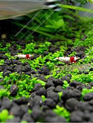abordables -Décoration d'aquarium Plante d'eau Mini Décoration Bijoux