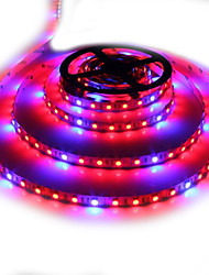 cheap -150-250 lm Growing Strip Lights 300 leds SMD 5050 Blue Red DC 12V