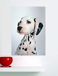 abordables -Animales Pegatinas de pared Calcomanías de Aviones para Pared Calcomanías 3D para Pared Pegatinas de pared de animales Calcomanías