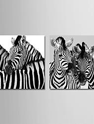 Недорогие -С картинкой Отпечатки на холсте - Животные / Фото Modern