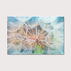 cheap Prints-Print Stretched Canvas Prints - Botanical Photographic Modern