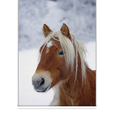 Classic Horse In Winter Roller Shade
