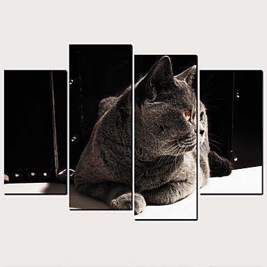 billige Trykk-Trykk Valset lerretskunst - Katte Kæledyr Klassisk Moderne Kunsttrykk