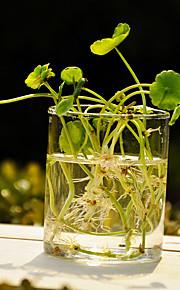 素材 ガラス テーブルセンターピース - 無し 花瓶 その他 テーブル 春 夏 秋 冬 オールシーズン