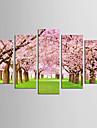 toile set Celebre A fleurs/Botanique Realisme Moderne,Cinq Panneaux Toile Toute Forme Imprimer Art Decoration murale For Decoration